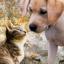 6 замечательных котят в дар