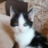 Очаровательный котёнок в добрые руки - г. Минск