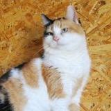 Кошка в дар - Катенька - г. Минск