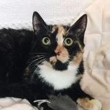 Кошка в дар - Трехцветка - Минск