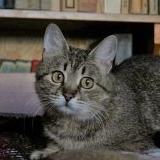 Кошка Мария в заботливые руки бесплатно - Минск