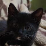 Котенок в добрые руки - г. Минск