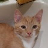 Котенок рыжее солнышко в дар - г. Слуцк