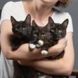 Котята в дар - Минск