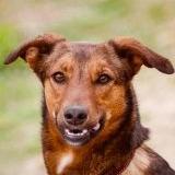 Собака Фрося в добрые руки - Минск, Минская область