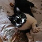 Кошка Милаша в заботливые руки бесплатно - Минск