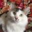 Котик Гоша в добрые руки бесплатно - г. Борисов, г. Минск