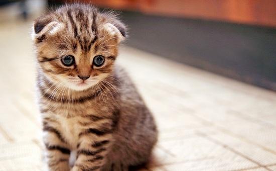 Клуб ДРУГ - У меня появился котенок. Чем кормить