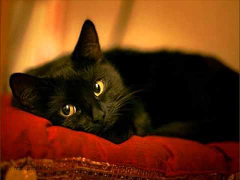 Клуб ДРУГ - 7 самых любопытных фактов о взаимоотношениях человека и кошки