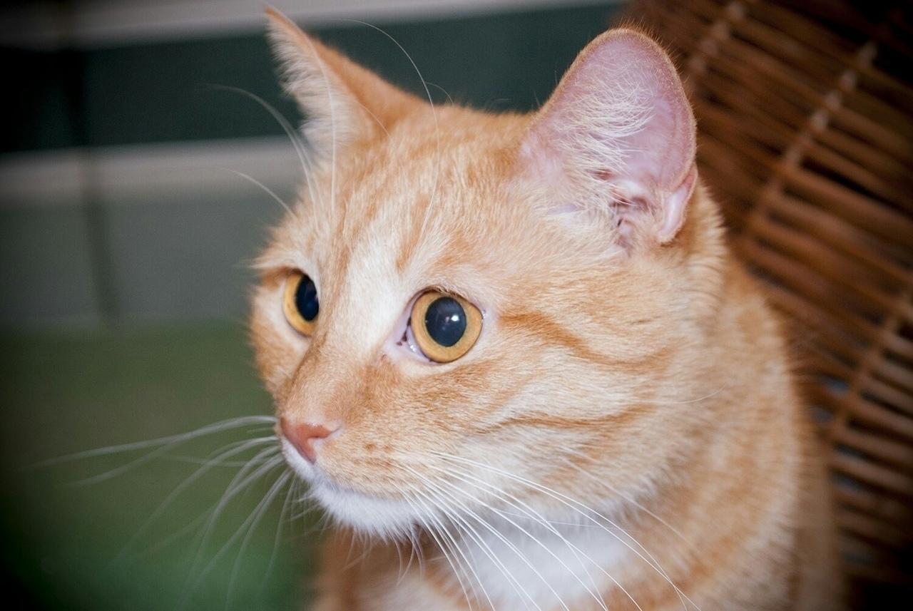 Клуб ДРУГ - 50 интересных фактов о кошках