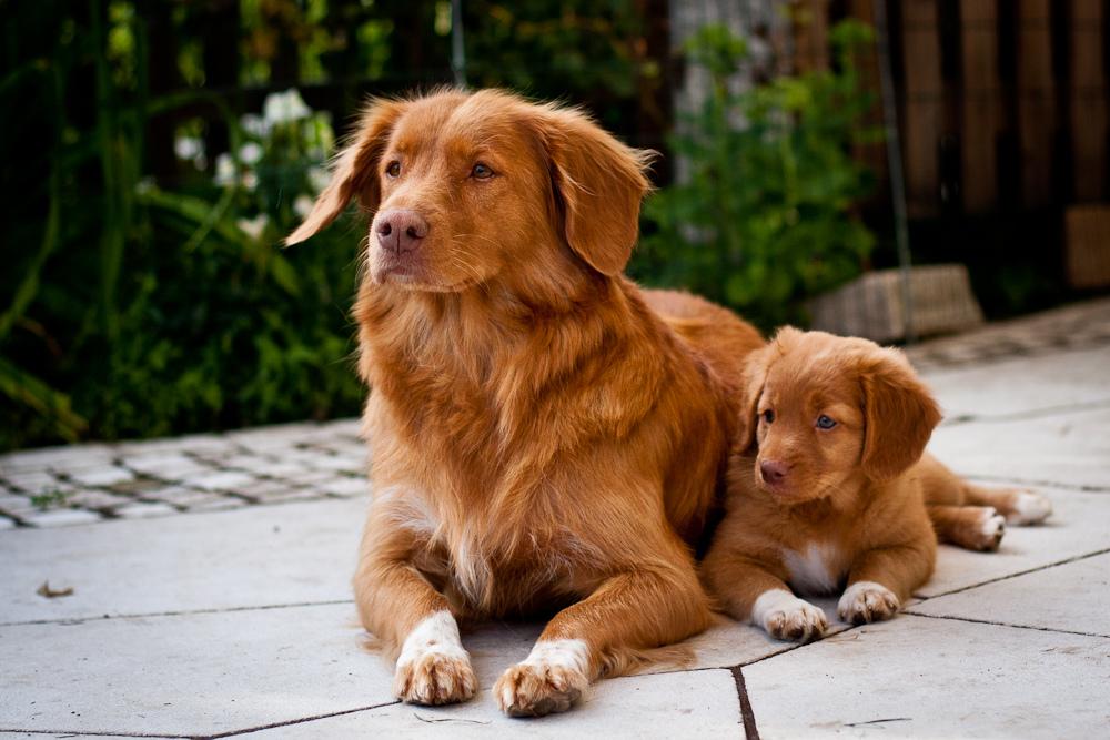 Клуб ДРУГ - Типичные представители охотничьих пород собак: охотничьи собаки