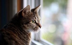 Клуб ДРУГ - Что делать, если кошка упала с большой высоты