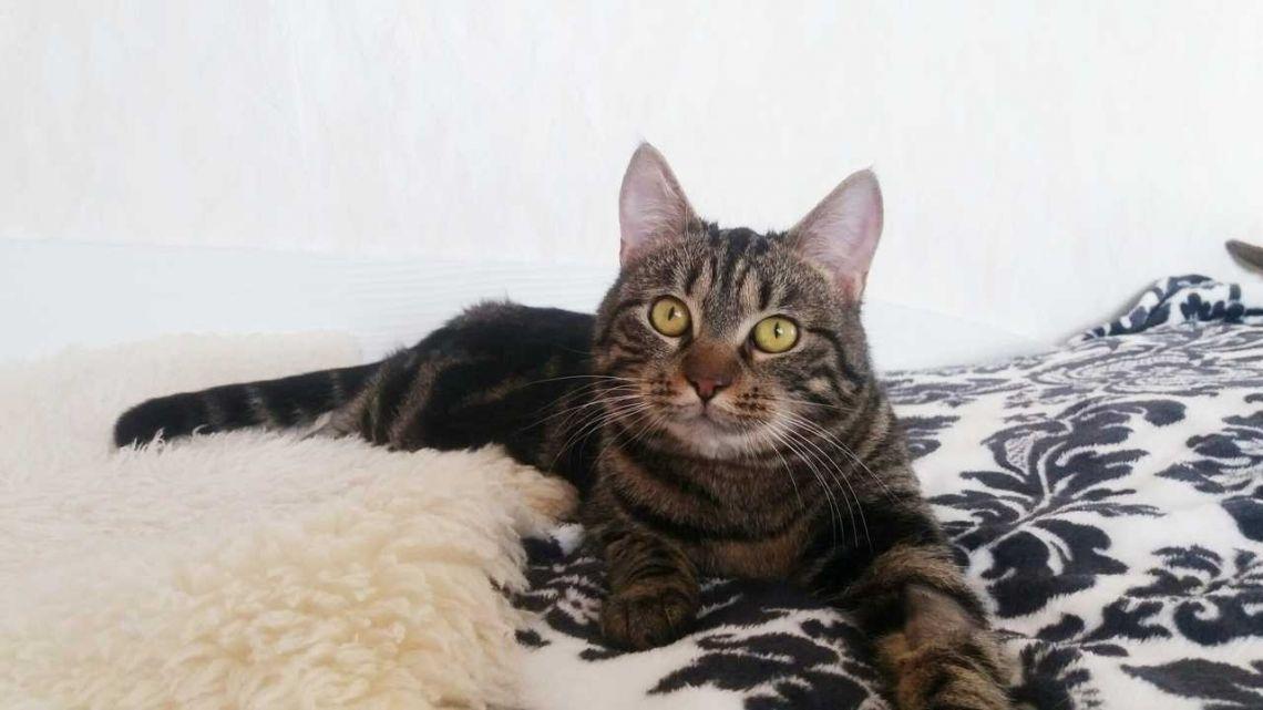 Кошка Киана в дар - Брест