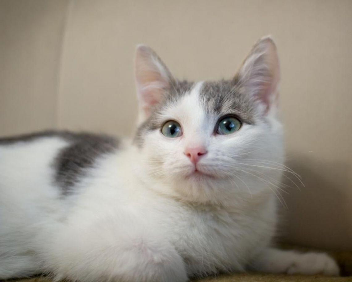 Котята в дар Сёма и Тёма - Москва