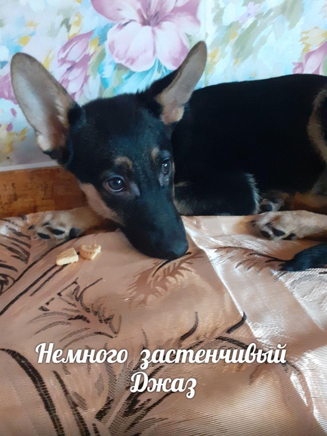 Пёсики-малыши в дар - Минск