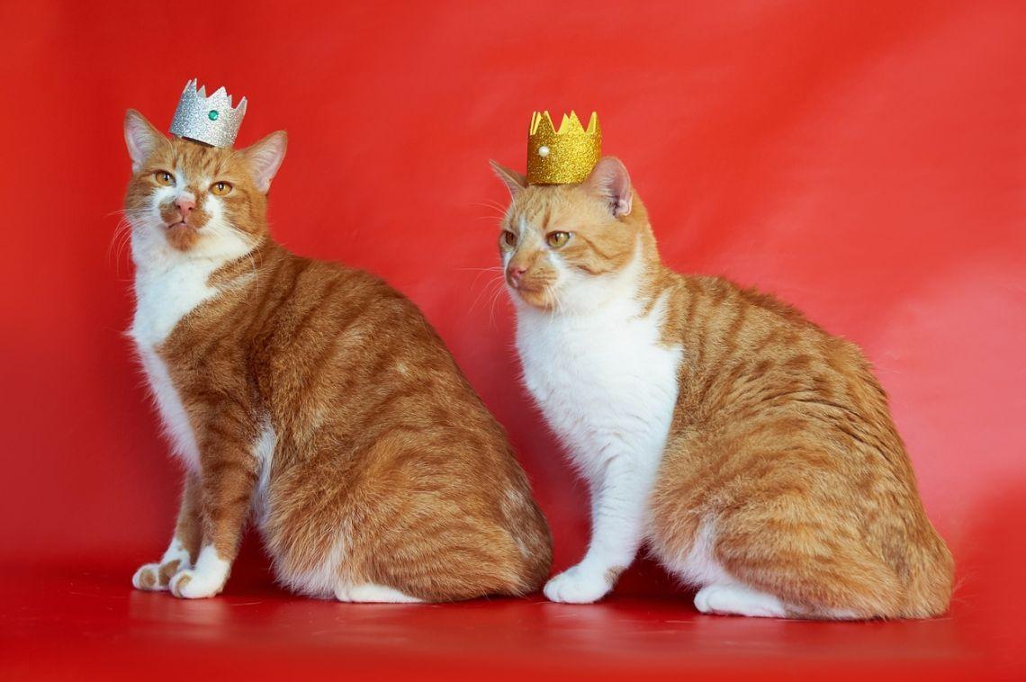 Коты-братья Конопушкины