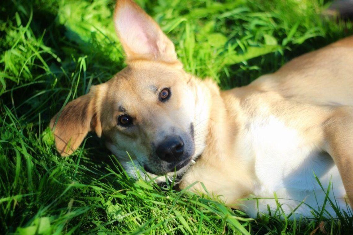 Пёс Руди в дар - Минск